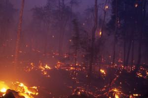 queimadas-em-florestas-13